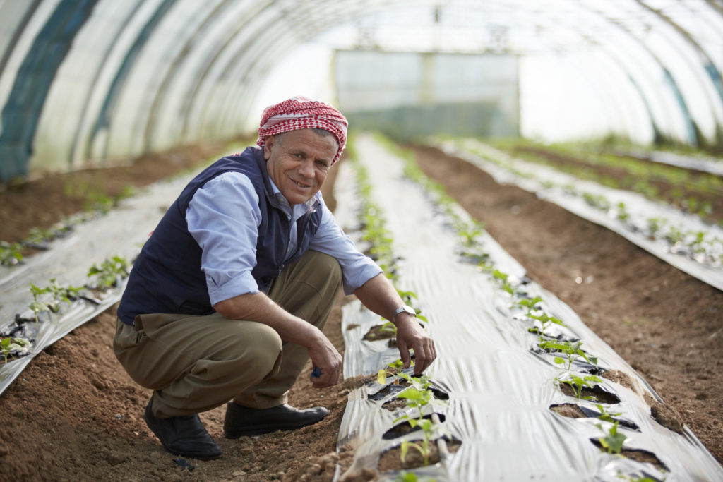 Gardener in polytunnel, Azadi Community Garden, Domiz 1 camp, Kurdistan Region of Iraq