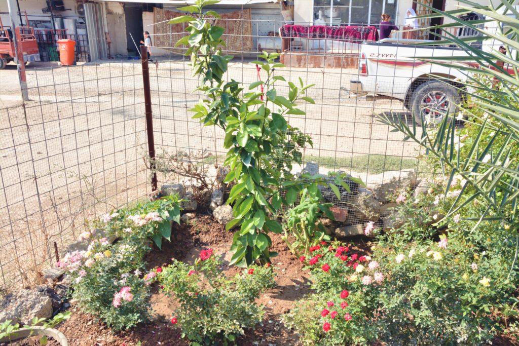 Muhammed Hssen and Zainab Abdullah's home garden