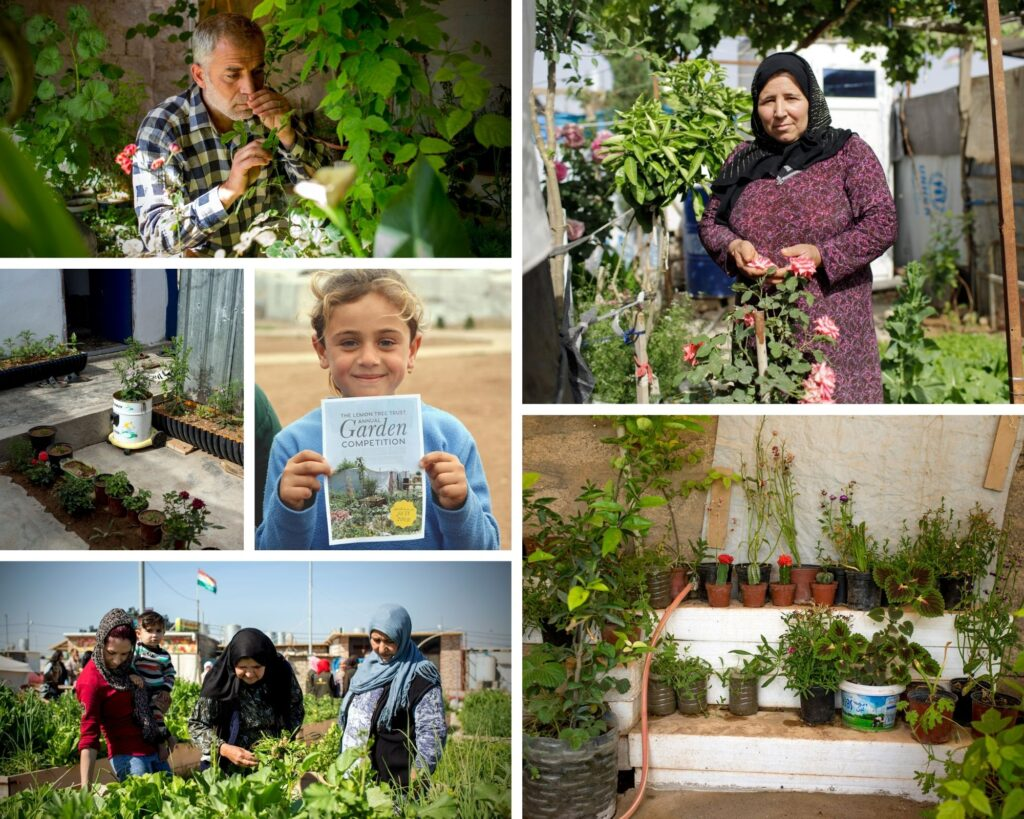 Collage of gardeners and home gardens in the refugee and IDP camps in the Kurdistan Region of Iraq.