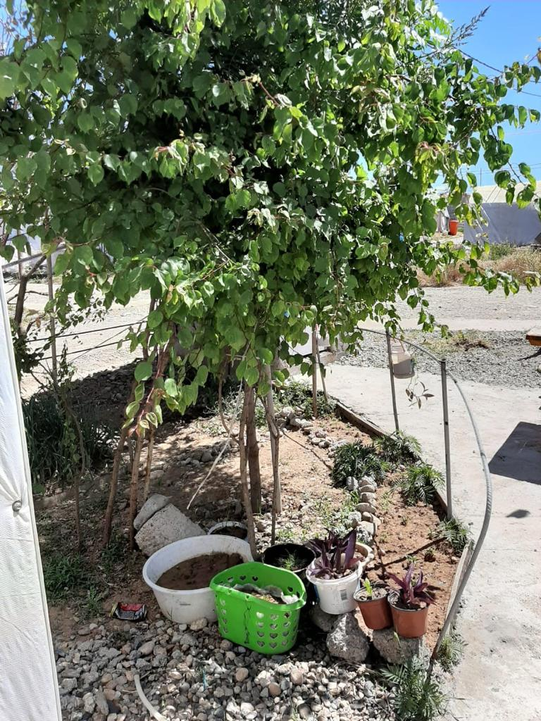 Close up of a tree and plants in Hajar Eido Khadida's home garden, Khanki camp, Kurdistan Region of Iraq