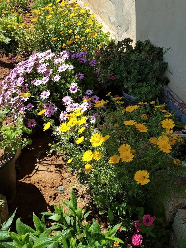 Flowers in Salih Yosuf's home garden