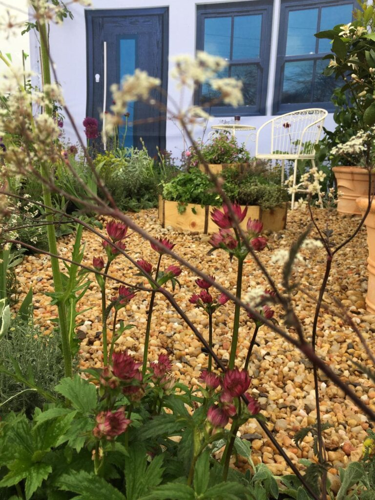 John Thoumire's garden 'Bayet' at Gardening Scotland - close up of flowers